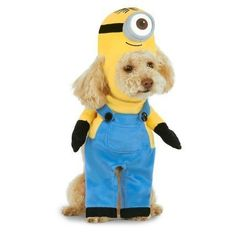 21 Doggy Halloween Costumes The Entire Neighborhood Will Love