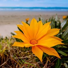 """""""Beach flowers. ☀ Summer where you at!  #beach #orewa #orewabeach #Whangaparaoa #nzbeaches #nz #nzbusiness #summer #summervibes #flowers #nzlandscape #newzealand #aotearoa #beachlife #Auckland #akl #canonnz #destinationnz #nztourism #nztravel #travelblogger #summernz #ig_nz #beachwalk #photography #summerlove #summerlook #love #lovemenot"""" by @roscoevision. #pic #picture #photos #photograph #foto #pictures #fotografia #color #capture #camera #moment #pics #snapshot #사진 #nice #all_shots #写真…"""