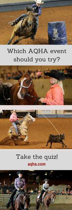 Which AQHA horse show event is best suited for you? Take this quiz to find out!