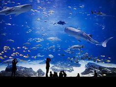 Hiepler & Brunier , Big Tank IV, 2007 / 2012 © www.lumas.com/ #Lumas - Colorful view of a fantastic aquarium with amazing fishes