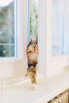 """mel-cat: """" candymapi: """" La parte migliore del coraggio è la discrezione. William Shakespeare @mel-cat … happy week Kitty baci baci   """" baci baci samba and maryTVB """""""