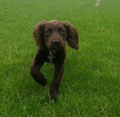 Little Jessie loving a run in the park.