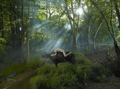 The Photographic World of Drew Gardner: The Forest