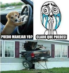Perro al volante