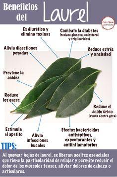 Healing Herbs, Medicinal Plants, Natural Health Remedies, Herbal Remedies, Natural Medicine, Herbal Medicine, Healthy Drinks, Healthy Tips, Health And Nutrition