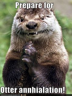 """Evil River Otter - Funny memes that """"GET IT"""" and want you to too. Get the latest funniest memes and keep up what is going on in the meme-o-sphere. Funny Shit, Funny Cute, The Funny, Funny Memes, Funny Stuff, Freaking Hilarious, Funny Captions, Stupid Stuff, Super Funny"""