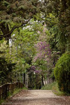 ,Todi, Province of Perugia , Umbria region Italy