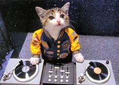 kitten dj