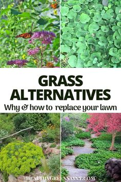 Grass alternatives can save you money, time, and water while also reducing greenhouse gas emissions. Converting some of your lawn to these eco-friendly grass alternatives is easier than you might think. #ecofriendly #grassalternatives #gardening #lawnalternatives