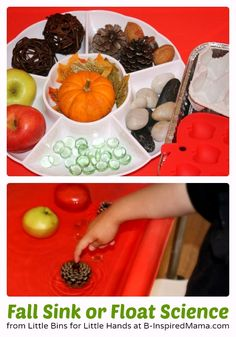 Fall Sink or Float Preschool Science Activity. This pin can help teachers come up with a fun science center activity for the preschool. Preschool Science Activities, Kindergarten Science, Preschool Lessons, Preschool Classroom, Autumn Activities, Science For Kids, Classroom Activities, Toddler Activities, Science Experiments