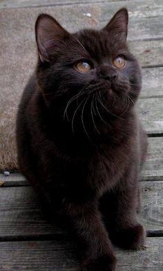 Black cats rule !