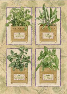 Garden Fresh: Herbs - Home & Garden - Picasa Web Albums Country Paintings, Vintage Country, Vintage Labels, Kitchen Art, Botanical Prints, Pretty Pictures, Zentangle, Flower Art, Diy And Crafts