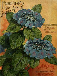 Farquhar's garden annual / R. & J. Farquhar Company :: Nursery and Seed Catalogs