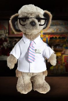 Life Insurance Quotes Compare The Market Entrancing Life Insurance  Compare The Meerkat  Pinterest