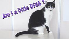 Am I a little Diva ? 🐱