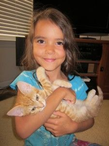 Tips for Preparing For and Caring For A New Cat #cats #pets