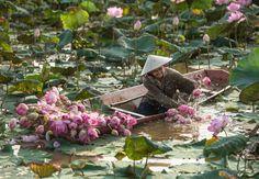 Clean lotus (Smile of Thailand) by Sarawut Intarob