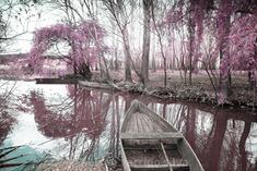 """""""Magical infrared light"""" by nelson garrido silva - Display Advertising, Print Advertising, Light Images, Us Images, Lit Captions, Magical Tree, Landscape Background, Royalty Free Images, Wall Art Prints"""