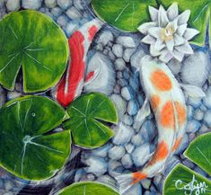 1000 images about colored pencil art on pinterest for Koi pond color