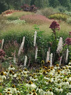 naturalistic planting scheme with echinacea and cimicifuga by celerycelery, via Flickr