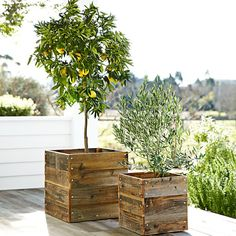 CHIC COASTAL LIVING: Three Things...I love these lemon trees in reclaimed timber pots.