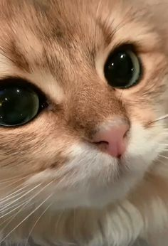 According to veterinarians, the 10 best dry foods for cats .- Laut Tierärzten die 10 besten Trockenfuttermittel für Katzen – According to veterinarians, the 10 best dry foods for cats – to - Cute Baby Cats, Cute Little Animals, Cute Cats And Kittens, Cute Funny Animals, Funny Cats, Adorable Kittens, Ragdoll Kittens, Tabby Cats, Bengal Cats