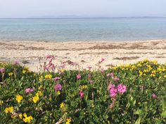 Spring arrived at Ai Giannis Beach
