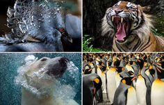 Wonderful Animal Pictures of 2014 - ARIS MESSINIS/AFP/Getty Images; Lisa Vaz/Sony World Photography Awards; Dikky S. Oesin/Sony World Ph...