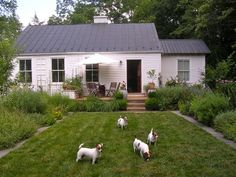 Complete with a herd of Jack Russell terriers in the front yard.