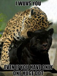 Funny Pictures Of Animals   Fun Claw: Funny Animal Pictures With Captions - 24 Pics