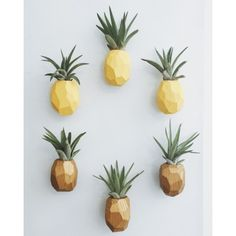 Set of 3 Pineapple Air Plant Magnets