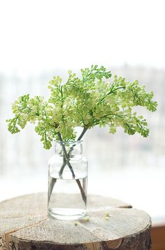 Fresh white lilac {By 79 ideas}