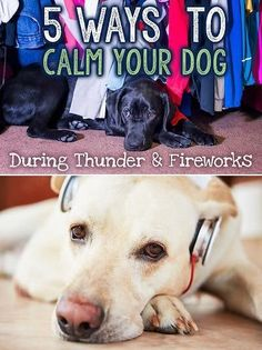 For parents of dogs that fear loud, unknown noises, a booming crack of thunder or the startling burst of fireworks in the distance can mean hours of heartache and helplessness trying to comfort your terrified 4-legged family member. If your dog becomes nervous, fearful, or panicked during loud events like thunderstorms or fireworks, there are a few things you can do to help him remain calm.