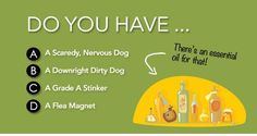 4 Essential Oil Recipes for your Dog