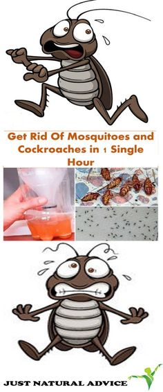 Mosquitoes are usually one of the most dangerous pests. These are carriers of many diseases