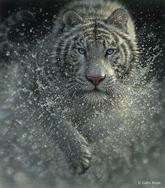 White tiger splashing animal painting art print.