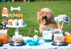 Hosting the perfect puppy party