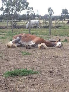 Sleepy Heckle