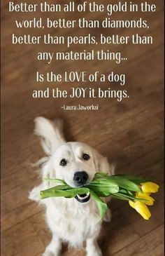 You need to know certain things in order to properly care for your dog's company. Since dogs cannot talk, you have to learn how to listen to your dog's non-verbal. Dog Quotes Love, Pet Quotes, Puppy Quotes, Dog Sayings, Quotes About Dogs, Old Dog Quotes, Humor Quotes, I Love Dogs, Cute Dogs