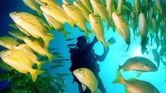 #GoBajaCA   Diving at Cabo Pulmo National Marine Park, Sea of Cortez