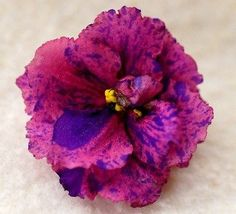 African Violet PLANT Psychedelic Rose fantasy! ~ I have this beauty now, though mine is still a baby.