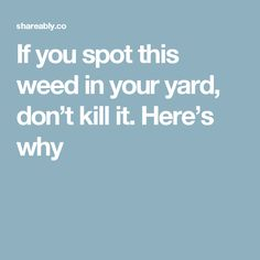 If you spot this weed in your yard, don't kill it. Here's why