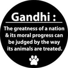 Gandhi had it right here. #gandhi #animal abuse