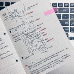 study notes | Tumblr