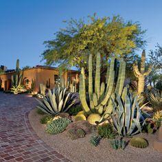 Botanical Beauty – Phoenix Home & Garden – Cactus Succulent Landscaping, Landscaping Plants, Front Yard Landscaping, Succulents Garden, Cactus Garden Ideas, Outdoor Cactus Garden, Arizona Landscaping, Cactus Terrarium, Cactus Cactus