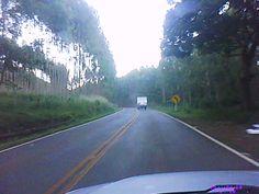 Viagens - Interior de Minas Gerais - Plantação de Eucalipto.