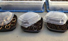 alternative to expensive seeding trays:  Clear topped plastic takeout container lined with wet shredded newspapers. Place toilet paper rolls cut in half to fill tray then fill rolls 2/3 with native soil. Finish filling rolls w/ peat moss and plant seeds and cover. When seeds sprout, take the pods out and plant the whole pod in garden! :D