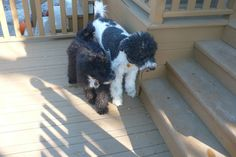 It's Fall 2012, Cooper & Mabel on the back deck in the yard.