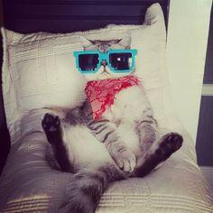 Happy Sunday!  #exoticshorthair #cat #cute #flatface #kitten #meow #pet #mreggs #catlover #exoticsofinstagram #smushface #weeklyfluff