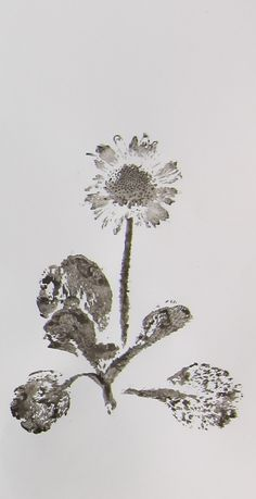 Kath Williamson. Daisy